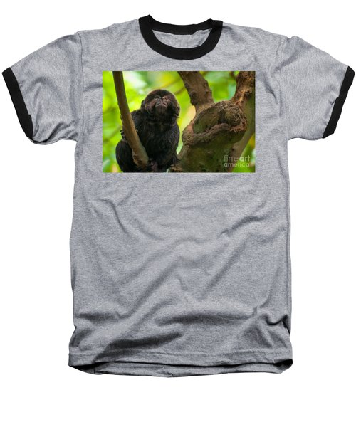 Goeldi's Callimico Baseball T-Shirt by Bianca Nadeau
