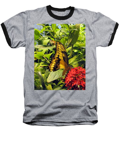 Gold Giant Swallowtail Baseball T-Shirt
