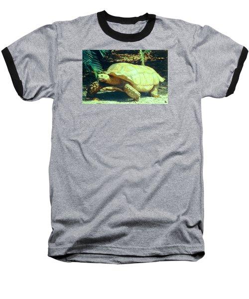 Golden Galapagos  Baseball T-Shirt