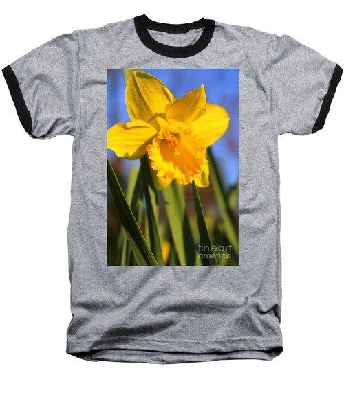 Golden Glory Daffodil Baseball T-Shirt