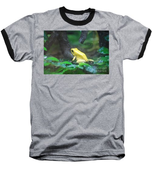 Golden Poison Frog Baseball T-Shirt by DejaVu Designs