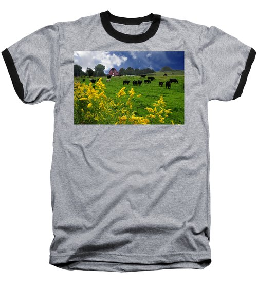 Golden Rod Black Angus Cattle  Baseball T-Shirt