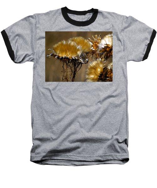 Golden Thistle Baseball T-Shirt by Bill Gallagher