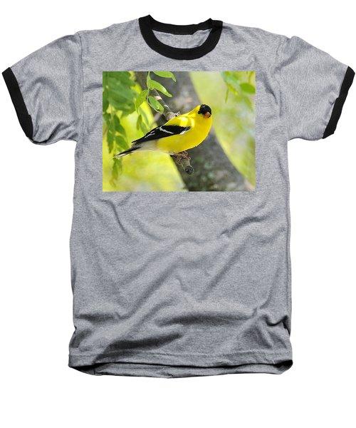 Goldfinch 299 Baseball T-Shirt