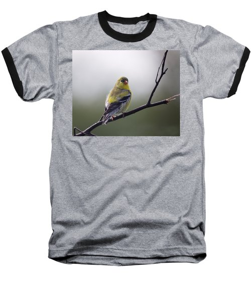 Baseball T-Shirt featuring the photograph Goldfinch Molting To Breeding Colors by Susan Capuano