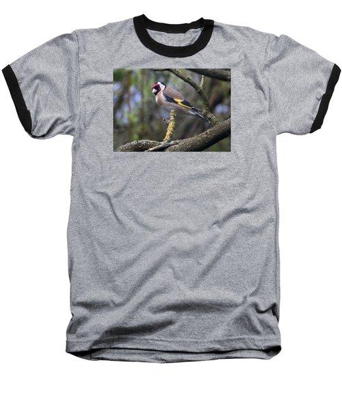 Goldfinch Baseball T-Shirt by Richard Thomas