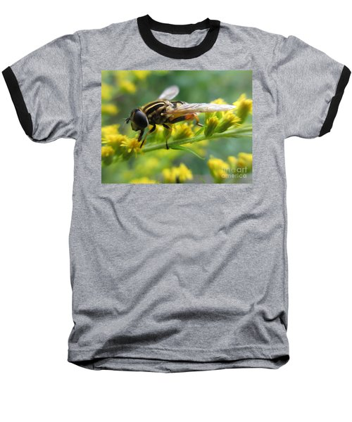 Good Guy Hoverfly  Baseball T-Shirt