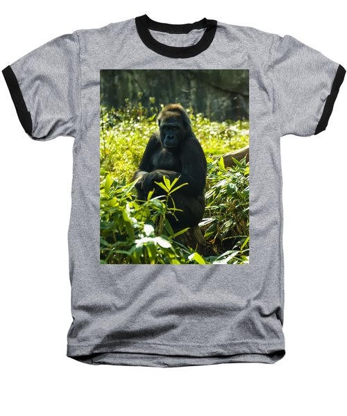 Gorilla Sitting On A Stump Baseball T-Shirt