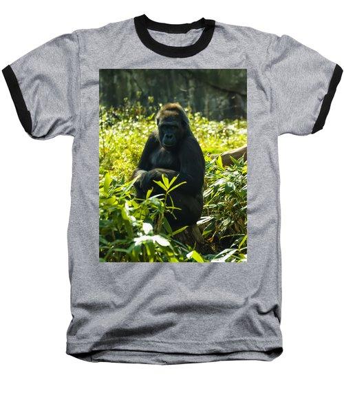 Gorilla Sitting On A Stump Baseball T-Shirt by Chris Flees