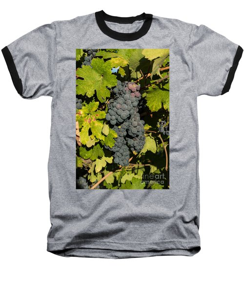 Grape Harvest Baseball T-Shirt
