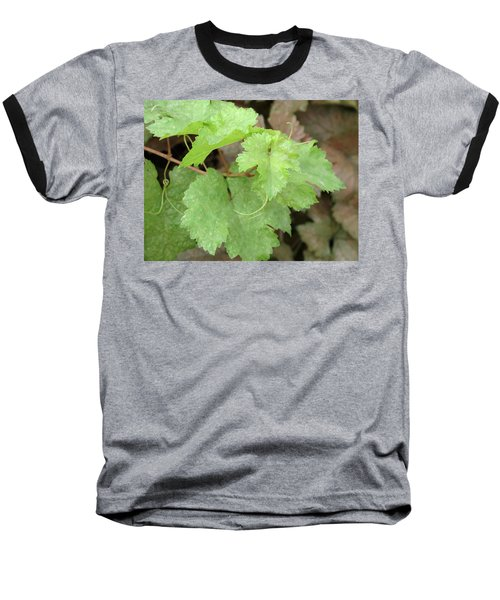 Baseball T-Shirt featuring the photograph Grapevine by Laurel Powell