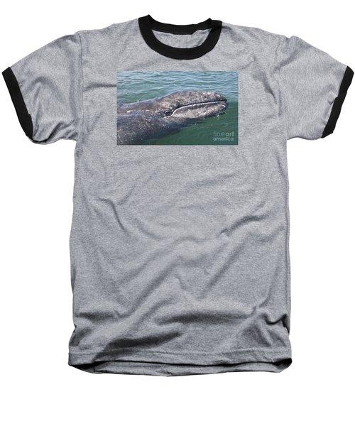 Gray / Grey Whale Eschrichtius Robustus Baseball T-Shirt