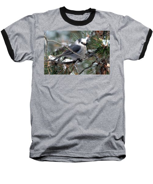 Gray Jay On A Snowy Pine Baseball T-Shirt by Marilyn Burton