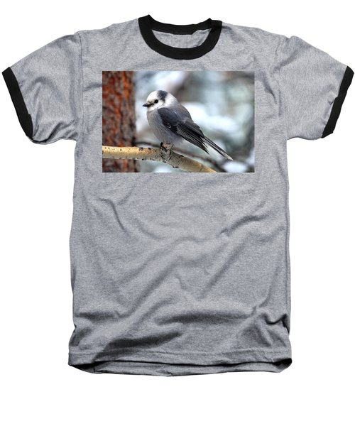Gray Jay On Aspen Baseball T-Shirt by Marilyn Burton