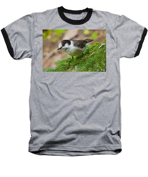 Gray Jay On Fir Tree Baseball T-Shirt by Jeff Goulden