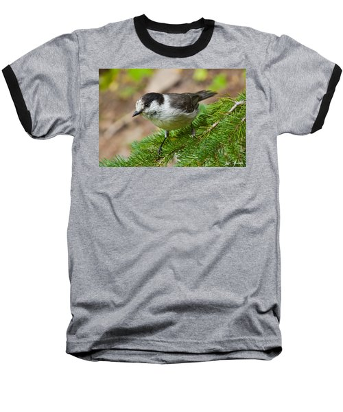Gray Jay On Fir Tree Baseball T-Shirt