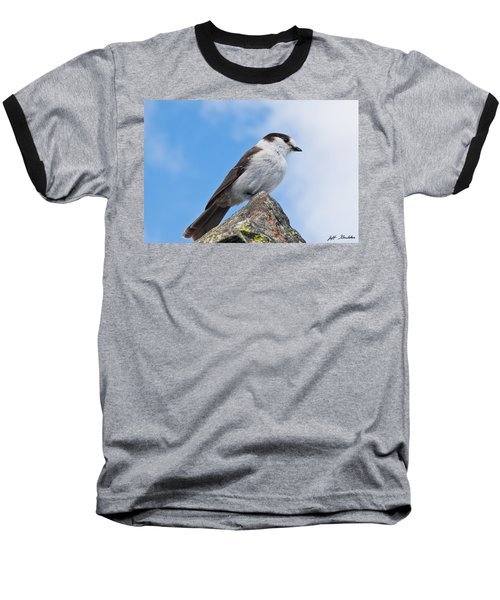 Gray Jay With Blue Sky Background Baseball T-Shirt