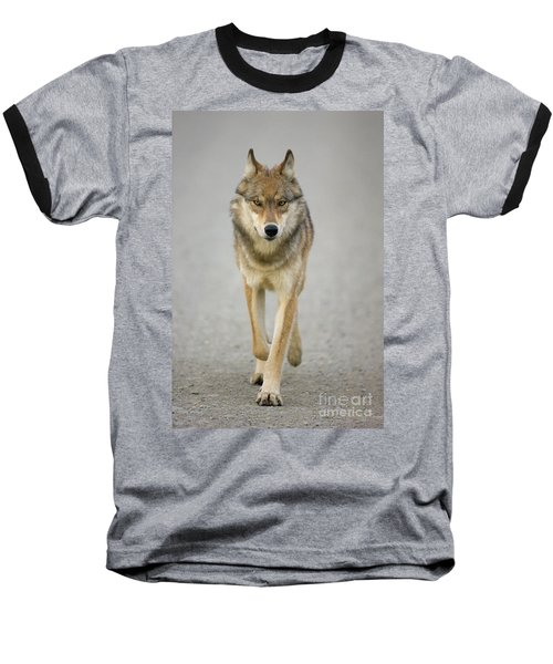 Gray Wolf Denali National Park Alaska Baseball T-Shirt