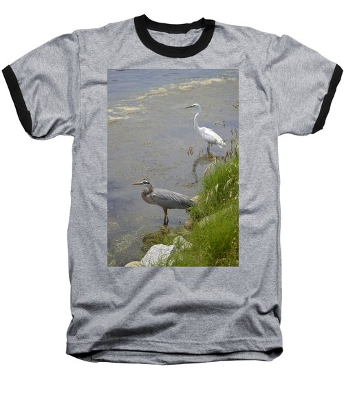Baseball T-Shirt featuring the photograph Great Blue And White Egrets by Judith Morris