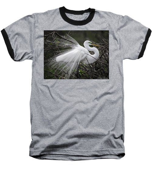 Great Egret Preening Baseball T-Shirt