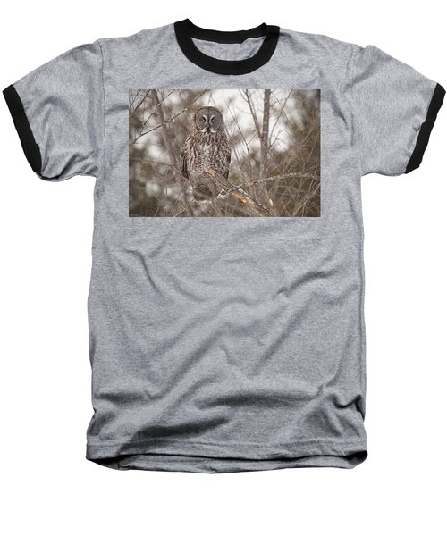 Great Grey Owl Baseball T-Shirt by Eunice Gibb