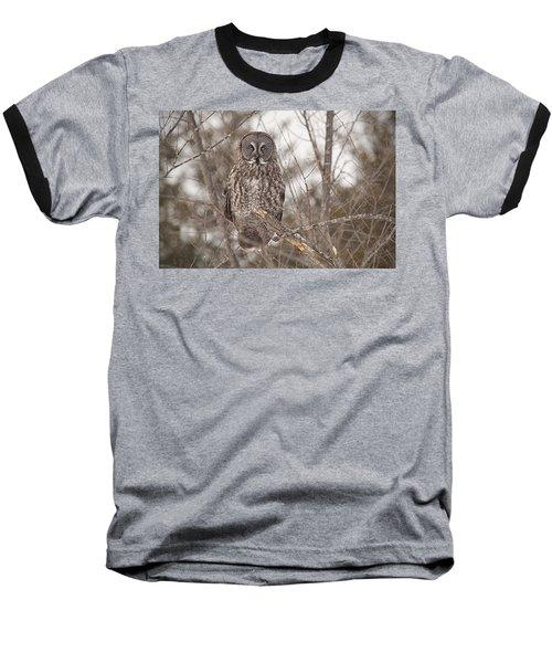 Great Grey Owl Baseball T-Shirt