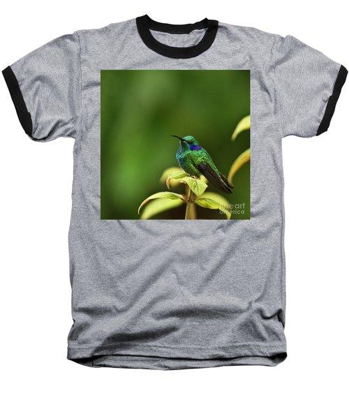 Green Violetear Hummingbird Baseball T-Shirt by Heiko Koehrer-Wagner