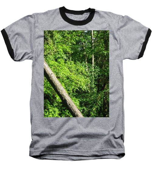 Greenbelt Fall Baseball T-Shirt by David Trotter