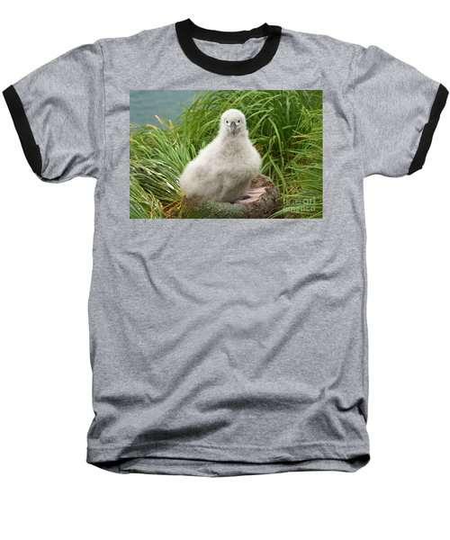 Grey-headed Albatross Chick Baseball T-Shirt