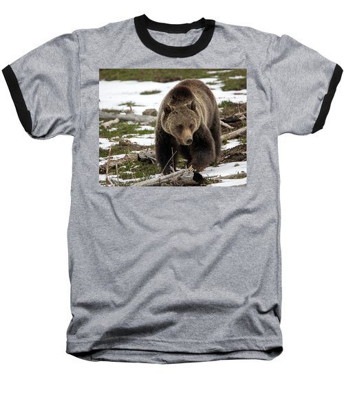 Baseball T-Shirt featuring the photograph Grizzly Bear In Spring by Jack Bell