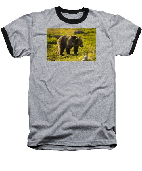 Grizzly Bear-signed-#4477 Baseball T-Shirt