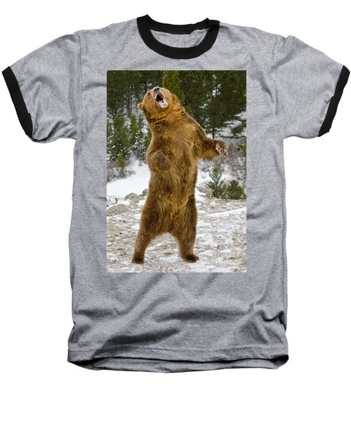 Baseball T-Shirt featuring the photograph Grizzly Standing by Jerry Fornarotto