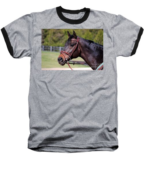 Handsome Gelding Baseball T-Shirt
