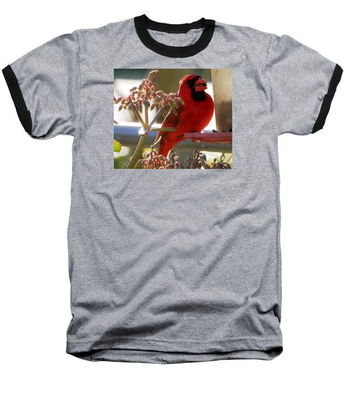 Handsome Red Male Cardinal Visiting Baseball T-Shirt