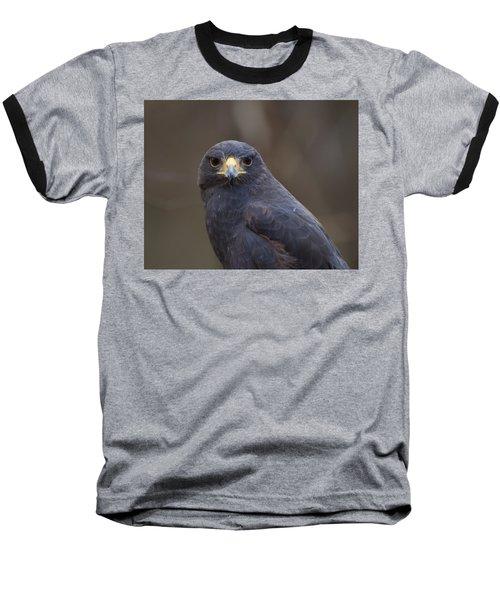 Harris Hawk Baseball T-Shirt by Chris Flees