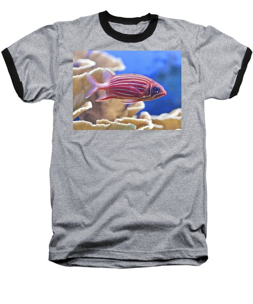 Hawaiian Squirrelfish Baseball T-Shirt by Maj Seda
