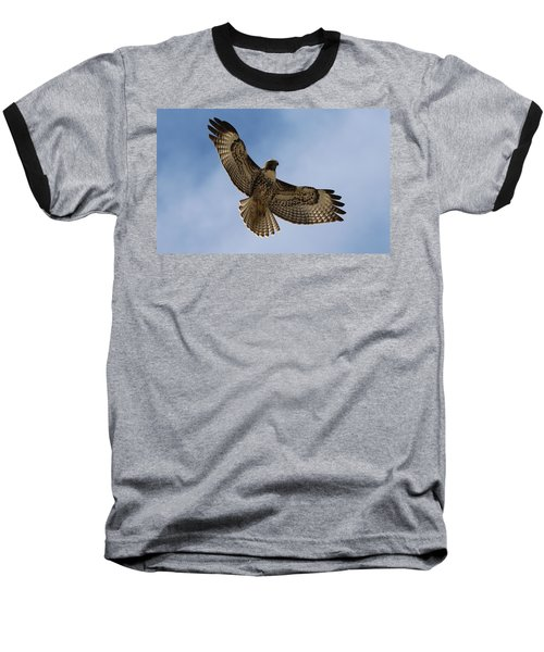 Hawk In Flight  Baseball T-Shirt