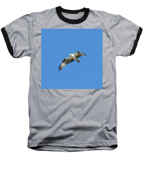 Hawk In Flight Baseball T-Shirt by Fortunate Findings Shirley Dickerson