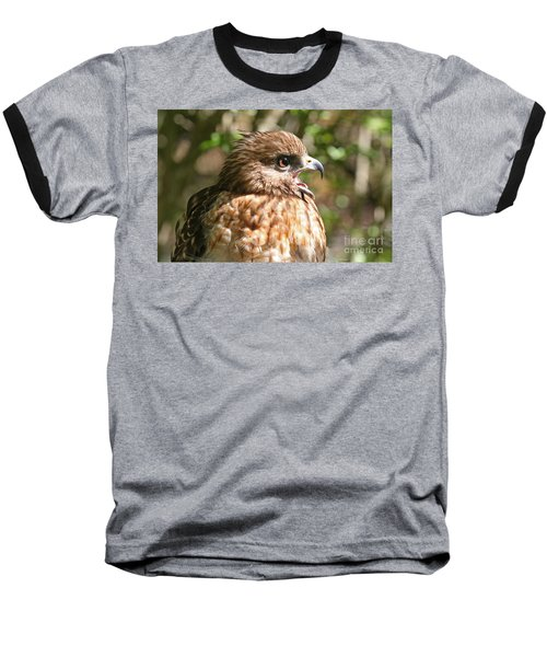 Hawk With An Attitude Baseball T-Shirt by Kevin McCarthy