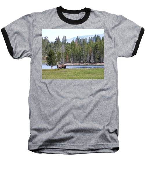 Hayden Valley Bison Baseball T-Shirt by Laurel Powell