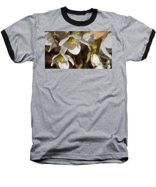 Helleborus Niger - Christrose Baseball T-Shirt