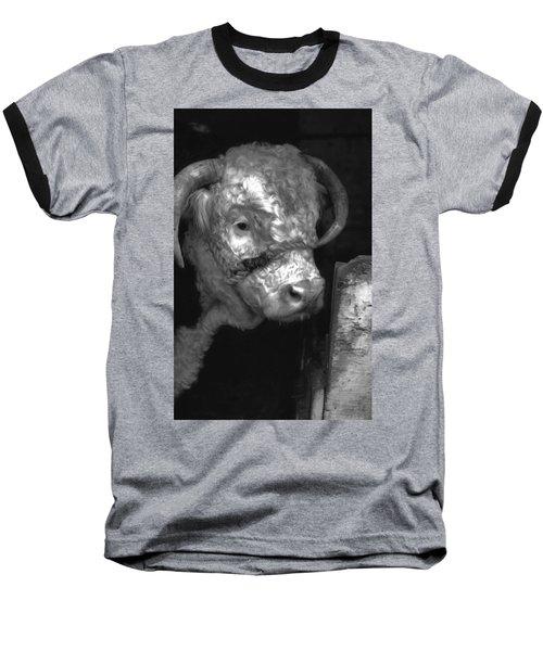 Hereford Bull In Black And White Baseball T-Shirt