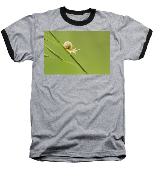 High Speed Snail Baseball T-Shirt by Mircea Costina Photography