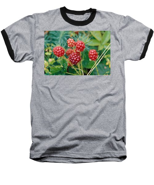 Highbush Blackberry Rubus Allegheniensis Grows Wild In Old Fields And At Roadsides Baseball T-Shirt