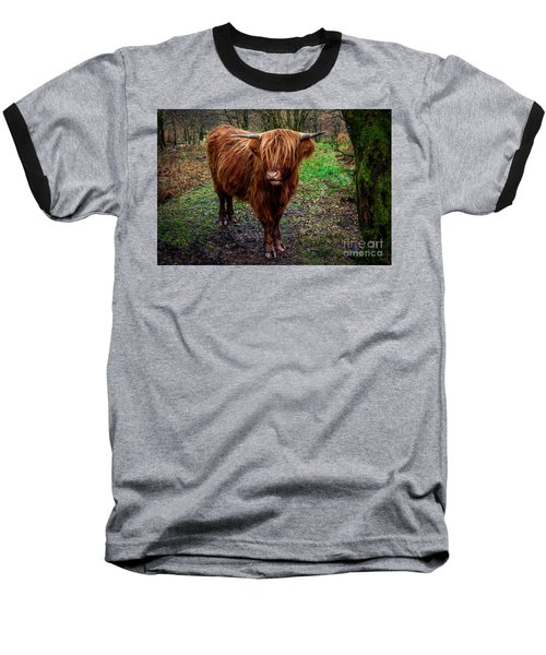 Highland Beast  Baseball T-Shirt by Adrian Evans