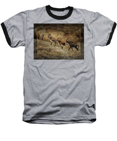 Homeward Bound Baseball T-Shirt