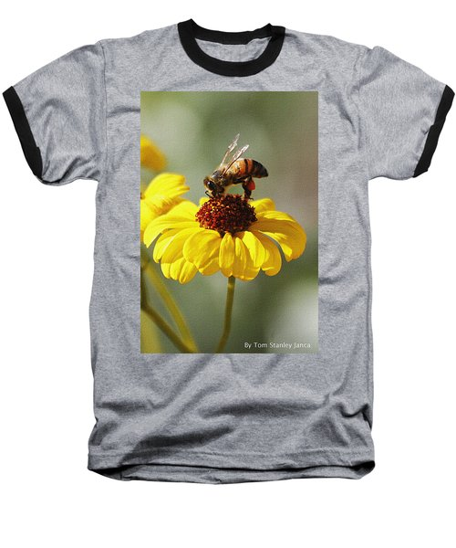 Honey Bee And Brittle Bush Flower Baseball T-Shirt by Tom Janca