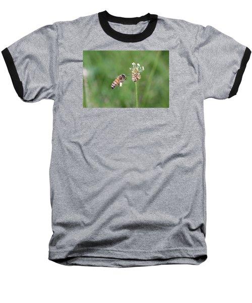 Honeybee And English Plantain Baseball T-Shirt by Lucinda VanVleck