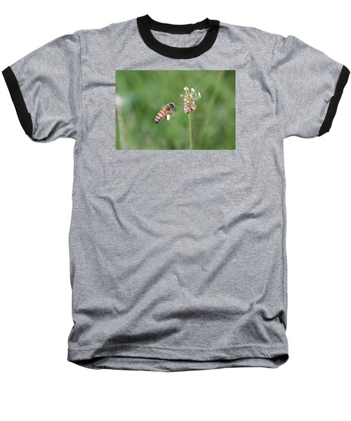 Honeybee And English Plantain Baseball T-Shirt