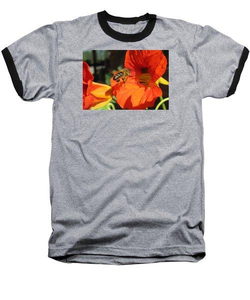 Honeybee Entering Nasturtium Baseball T-Shirt by Lucinda VanVleck